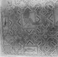 Press and Information Office, Republic of Cyprus: Kourion, Annex of Eustolios, Mosaic floor (2B-070-003)